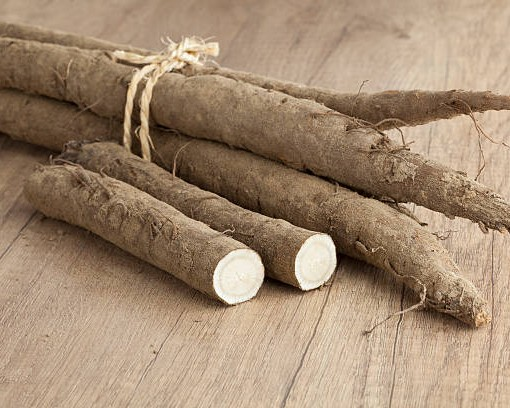 Bunch of fresh whole and half burdock taproots